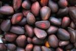 Масло кедровых орешков помогает похудеть