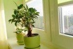 Комнатные растения очищают воздух от озона