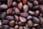 Онищенко запретит кедровые орехи в России