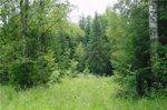 Жить возле леса - полезно для здоровья