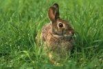 Британские хирурги успешно опробовали на кроликах новую технику транспланта ...