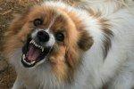 Бешенство: когда собака - враг человека