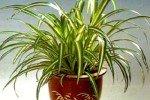 Женский половой гормон обнаружен в растениях