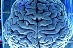 Мозг в процессе запоминания