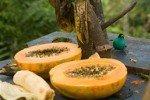 Подтверждены противораковые свойства папайи