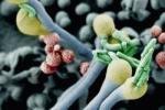 В США и Канаде распространяется смертельный грибок