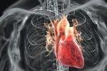 Сердца мужчин и женщин не бьются в унисон