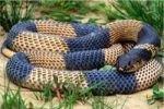 Змеиный яд скоро применят в косметологии