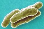 Заболеваемость туберкулезом в Великобритании достигла максимума