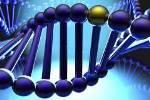 Ученые сделали прорыв в изучении рака почек