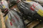 В Россию запрещены поставки рыбы из Японии