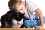 Чем полезно общение малышей с кошками?