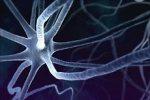 Исследователи нашли способ сделать из клеток кожи нейроны