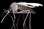Химические соединения спасут от москитов, переносящих малярию и желтую лихо ...