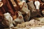 Ветеринары обвинили антибиотики для животных в возникновении супербактерий