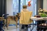 Домашние животные поддерживают не хуже человека
