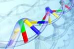 Сенсация: эксперты открыли новые модификации ДНК-составляющих