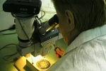 Клеточная терапия теперь не грозит раком, заверяют исследователи