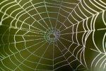 Человеческую кожу можно сделать из паутины