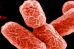 В Канаде обнаружены орехи, зараженные E. coli