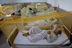 Пакистан ожидает одна из самых крупных эпидемий лихорадки Денге