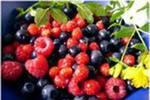 Осторожно, ягоды Смоленской и Брянской областей