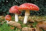 Будьте осторожны с грибами