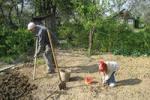 От депрессии едем в сад  работать