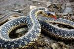 Осторожно, змеи!