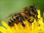 Лечение онкологии продуктами пчеловодства