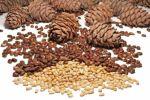 К вопросу о полезности кедровых орехов