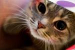 Кошки помогут победить болезни