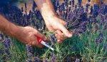 Cбор лекарственных растений