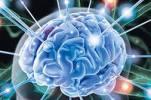Ученые Телль-Авивского университета выявили интересную особенность работы человеческого мозга