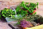 Наши помощники-растения и травы