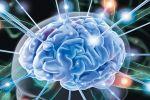 В мозге работает уникальная система регулирования сна, сделали открытие нев ...