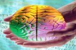 Умное приспособление на службе клеток мозга