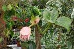 Какие комнатные растения считаются ядовитыми