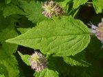 Популярные травы и специи в народной медицине