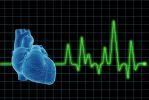 Сердце можно выращивать из стволовых клеток