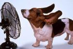 Как пережить жару. Часть 2