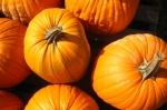 Полезные и вкусные дары осени. Часть 1