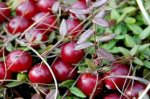 Полезные и вкусные дары осени. Часть 5