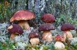 На базе исследования грибов можно создавать новые и совершенствовать уже из ...