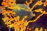Против коронавируса применяют лекарства для лечения рака