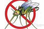 Боремся с комарами и мошкой без применения химии